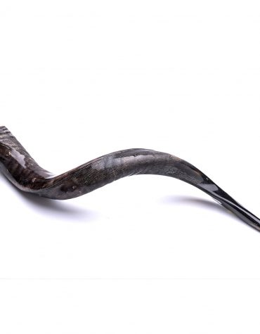 Yemenite shofar Kosher by Badatz the Eda Charedit