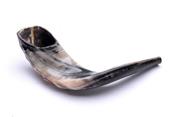 , Shofar Deer Horn – Size 5 (45-40 cm) under the supervision of Rabbi Mahfud Shlita, Jewish.Shop